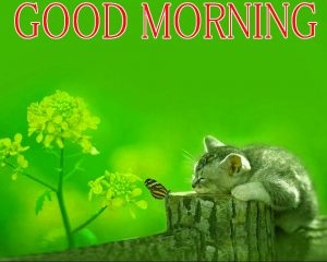 Beautiful New Cute Good Morning Images Wallpaper Pictures Download