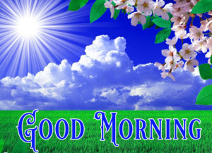 Nature Good Morning Image Pictures Free