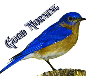 Nature Good Morning Image Pics Download In HD