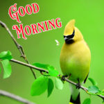 HD 1264+ Nature Good Morning Images Wallpaper for Whatsapp