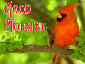 Nature Good Morning Image Pictures Free for Facebook