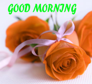 Beautiful Flower Good Morning Wishes Images Wallpaper Free for Girlfriend