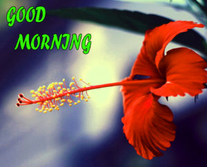 Beautiful Flower Good Morning Wishes Images Pics Download