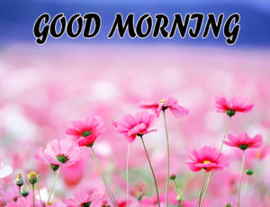 Beautiful Flower Good Morning Wishes Images Wallpaper Pics Download for Facebook