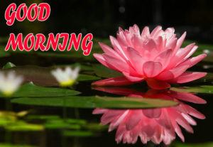 Beautiful Flower Good Morning Wishes Images Pics for Whatsapp