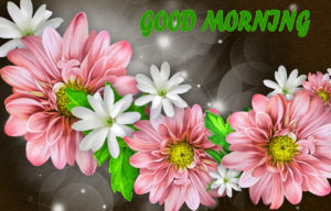 Beautiful Flower Good Morning Wishes Images Pic Wallpaper Download