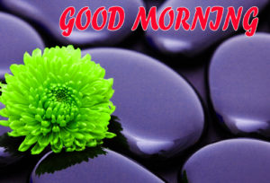 Beautiful Flower Good Morning Wishes Images Wallpaper Free Download for Facebook