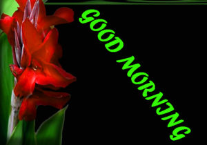 Beautiful Flower Good Morning Wishes Images Wallpaper Pics With Red Rose