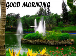 Beautiful Flower Good Morning Wishes Images Pictures Free