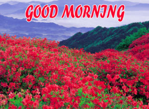 Beautiful Flower Good Morning Wishes Images Pics for Facebook
