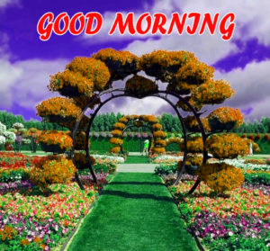 Beautiful Flower Good Morning Wishes Images Pic Wallpaper