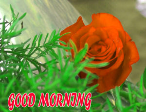 Beautiful Flower Good Morning Wishes Images Photo For Facebook