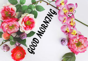 Beautiful Flower Good Morning Wishes Images Pic Free Download
