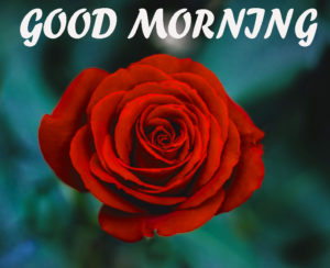 Beautiful Flower Good Morning Wishes Images Wallpaper Download for Facebook