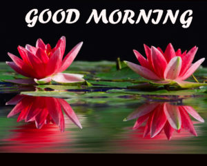 Beautiful Flower Good Morning Wishes Images Wallpaper Download In HD