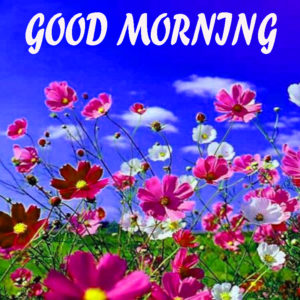 Beautiful Flower Good Morning Wishes Images Wallpaper Pics Download
