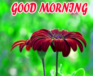 Beautiful Flower Good Morning Wishes Images Wallpaper Pics for Facebook